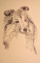 Shetland Sheepdog Dog Art Print #45 Stephen Kli... - $60.00