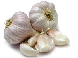 Garlic thumb200