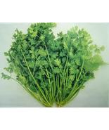 CORIANDER ESSENTIAL OIL   1/2 oz - $7.00