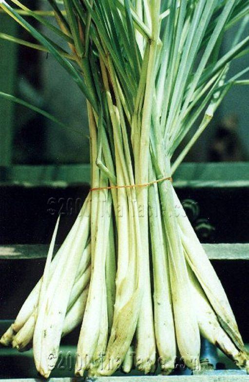 Lemongrass 1