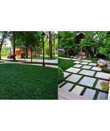 Dwarf/Mini Mondo Grass 100 Plants united states - $62.99 - $153.99