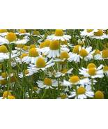 CHAMOMILE FLORAL WATER  4 oz - $12.00