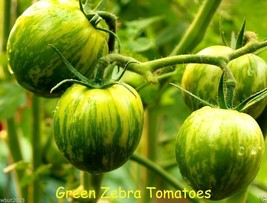 GREEN ZEBRA TOMATO - HEIRLOOM SEEDS - Beautiful,Delicious,Tangy Salad To... - $2.92+