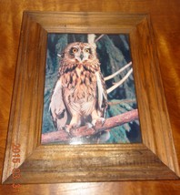 Vintage picture of owl sitting on tree branch wood Framed Brown - $42.09