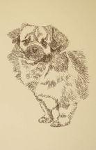 Tibetan Spaniel Dog Art Portrait Print #24 Kline adds dog name free WORD DRAWING - $49.95
