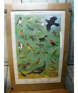 VTG 1965 PENNSYLVANIA GAME COMMISSION WILDLIFE Birds Of The Forrest NED ... - $44.54
