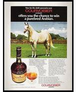 Horse Arabian Horse Courvoisier Cognac Brandy Photo Shaitaan 1977 Contes... - $14.99