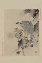 Hawk - Art Print - $19.99+