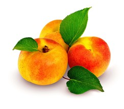 Apricot and Cream-Home Fragrance Oil-Warmer / B... - $6.00