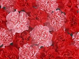 Carnation - Home Fragrance Oil - Warmer / Burne... - $6.00
