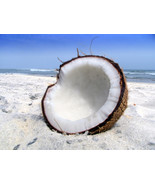 Coconut Bay (Type) - Home Fragrance Oil - Warmer / Burner Oil - 2 Fluid ... - $6.00