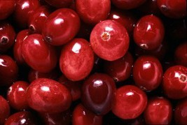 Cranberry-Home Fragrance Oil-Warmer / Burner Oi... - $6.00