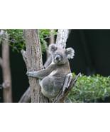 Eucalyptus-Home Fragrance Oil-Warmer / Burner O... - $6.00