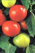 2000 Seeds of Big Beef Vffnta Hybrid - Tomatoes Mid Season - $193.55