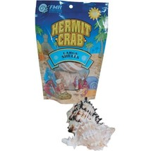 Florida Marine Research Shells for Hermit Crabs - Large - 2 pk - $13.82