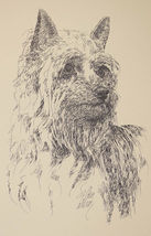 Silky Terrier Dog Art Print #27 WORD DRAWING Kline adds your dogs name free. - $49.95