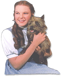 Dorothy with toto magnet