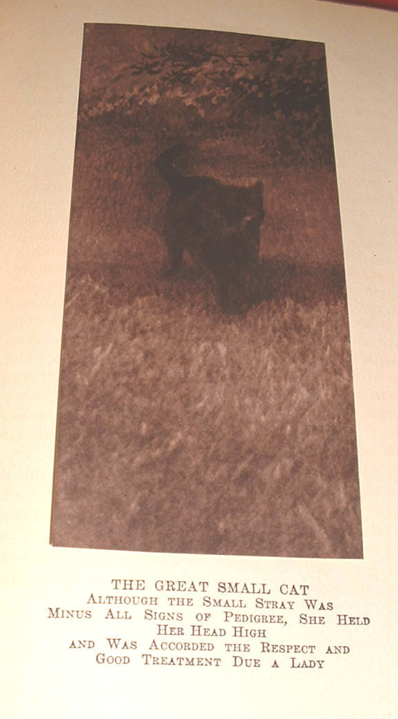 Great Small Cat & Others by Southworth 1914 tipped illustrations