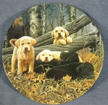 Sweet Dreams Collector Plate First Dog Days Jerry Gadamus Puppies Dogs B... - $19.95