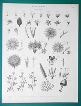 BOTANY Linnean Orders of Plants No of Pistils - 1822 Botanical Original ... - $22.46