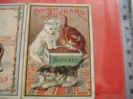 1 calendar 1899 card chocolate SUCHARD WIESER IV nr 10 - 3 kittens, 1 ca... - $127.71
