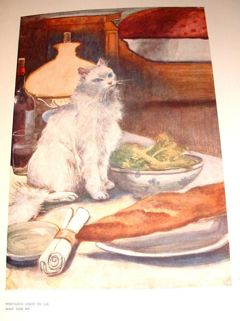 The Cat Violet Hunt Persian cat 1905 illustated Birkenruth