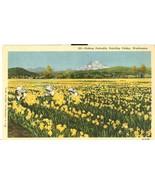Picking Daffodils, Puyallup Valley, Washington, unused linen Postcard  - $4.99