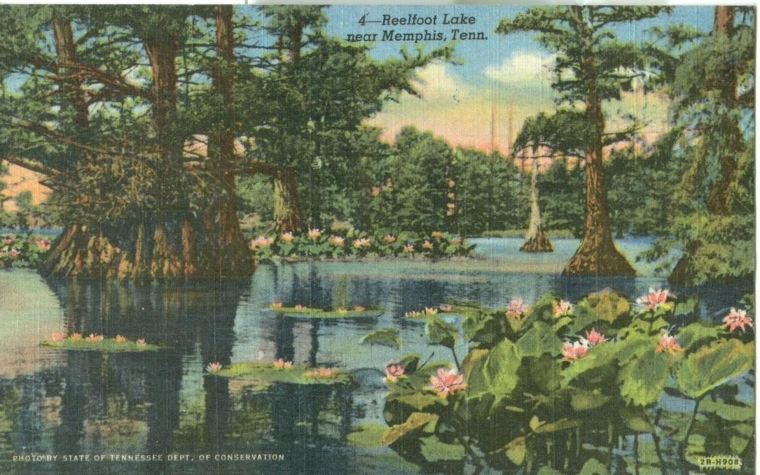 Reelfoot Lake near Memphis, Tennessee, 1951 used linen Postcard
