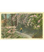 Rhododendron Trail, the Great Smoky Mountains National Park, unused Post... - $6.85