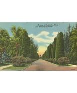 Avenue of Australian Pines and Hibiscus in Florida, unused linen Postcard  - $3.99
