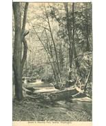 Scene in Ravenna Park, Seattle, Washington, early 1900s unused Postcard  - $9.99