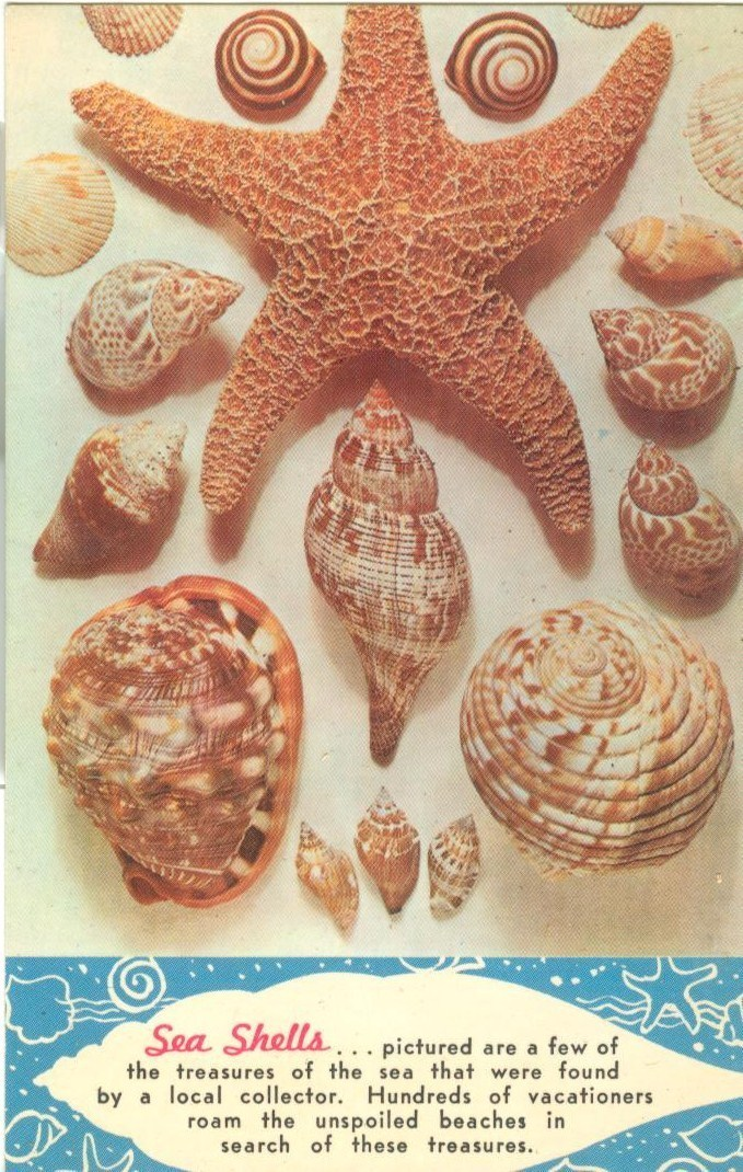 Sea Shells, Treasures of the Sea, unused Postcard
