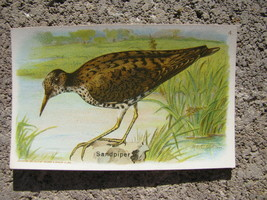 Vtg Litho 1918 Arm Hammer Useful Birds of America 5th Series Card No4 Sa... - $19.78