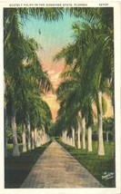Stately Palms in the Sunshine State, Florida, 1932 used Postcard  - $4.99