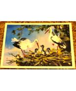 New Born Stork Congratulations Postcard Newborn Illustration Soviet Vint... - $4.50