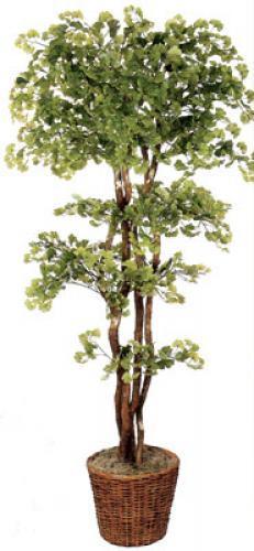 "84"" Natural Wood Gingko Tree Artificial House Plants"