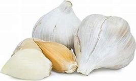 Elephant Garlic, 2 Large Bulbs (2 Count), Great for Planting, Eating or ... - $20.99