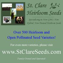 Onion - Crystal White Wax - Non-Hybrid - Non-GMO - St. Clare Heirloom Seeds - $1.99