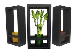 GoGoGreen88 - lucky bamboo in Colored Glass Vase with Wooden Frame - €27,72 EUR
