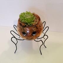 Spider Planter with Succulent, Halloween Pot, Sempervivum, Hens and Chicks image 6