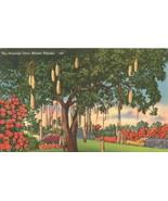 The Sausage Tree, Miami, Florida, unused linen Postcard  - $3.99