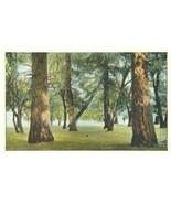 US Landscape, Woods, Trees, early 1900s unused Postcard - $3.99
