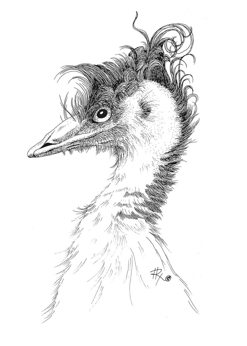 Wild Emu, Framed Matted Wildlife Art Print, Pen and Ink, Bird Art Drawing