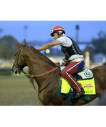 8x10 color photo - KY Derby Winner CALIFORNIA Chrome #5 - $20.00