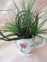 Raised Roses Ceramic Mug with Airplant Arrangement - $24.50
