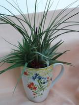Spring Garden Mug Airplant Arrangement - $24.50