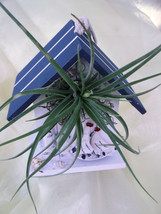 Bird House with Blue roof airplant arrangement - $18.00