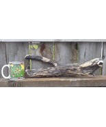DRIFTWOOD FOR AQUARIUM CRAFTS WALL ART REPTILES FROM ROCKY MOUNTAINS USA... - $15.95