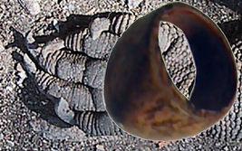 Haunted Ring Treasures Of Chinese Dragon Djinn Witch Estate Spirits Astral Plane - $49.97
