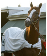 8x10  color photo - headshot of California Chrome - $20.00